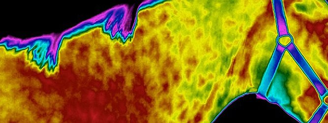 Equine Thermography Category 2