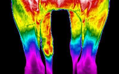 Equine Thermal Imaging Course