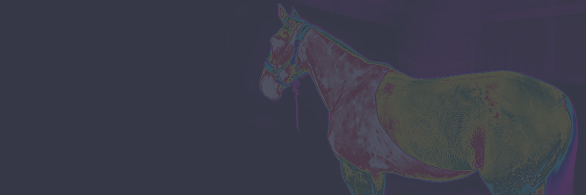 Equine Thermal Imaging Courses