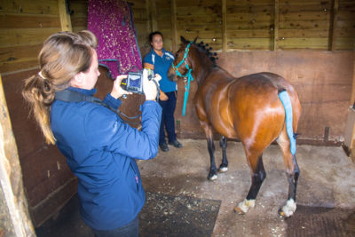 Equine Thermography Training Course