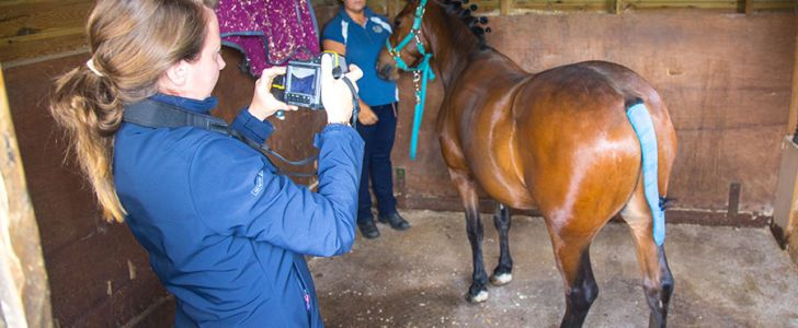 Equine Thermography Courses