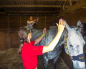 iRed Equine Thermography Courses