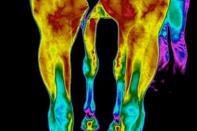 Equine Thermographers Course