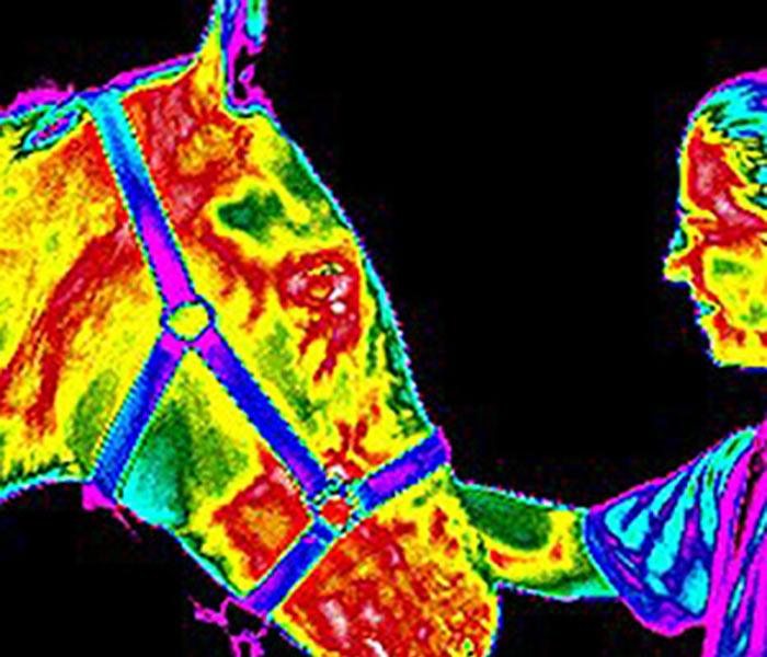 equine-thermal imaging-1